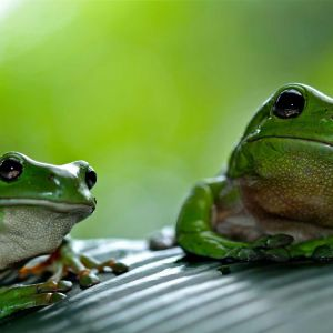 Save the Frogs Day Nature Symposium - April 25, 2020
