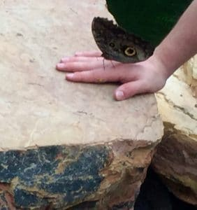 A giant owl butterfly sits on the hand of a visitor