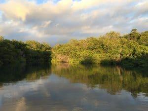 Mangrove shadows in Ecuador.