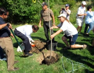Planting trees together is an enjoyable part of collaborative greening.