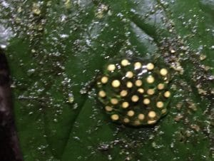 22. Ecuador Adventures and Frogs – Casa Divina Part IV