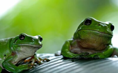 Save the Frogs Day Nature Symposium – April 25, 2020