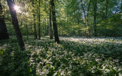 Nature's Food Forests and How to Recreate Them in Public Parks